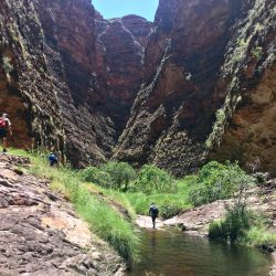 Bungles wet season walkers