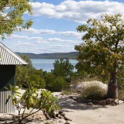 Kimberley Coastal Camp boab view